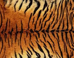 अवैध रूपमा बाघको छाला ओसारपसार