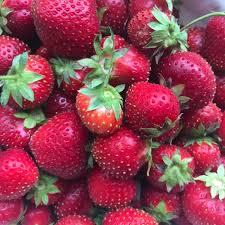 अमेरिका छाडेर स्वदेशमा स्ट्रबेरीको उत्पादन र अनुसन्धान